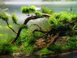 UDeco-Mini-Landscape