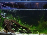 Biotope-aquarium-contest-2013-Sepik-2