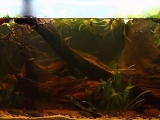 Biotope-aquarium-design-contest-2014-SA-1