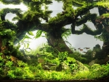 UDeco-Coral-Driftwood-Mini-Landscape