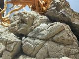 UDeco_Elephant_Stone_Desert_Driftwood_03