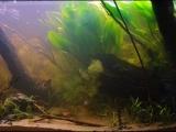 Biotope-aquarium-contest-2013-Sepik-3