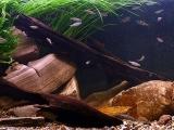 Biotope-aquarium-design-contest-2014-EU-1