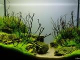 UDeco-Mini-Landscape-1