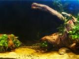 UDeco-Coral-Driftwood-River-Dark-River-Amber