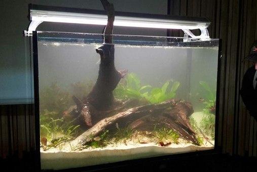 Оформление биотопного аквариума