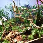 Коряги для аквариума UDeco Desert Driftwood, камни для аквариума UDeco Brown Lava