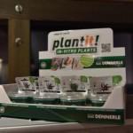 Растения DENNERLE
